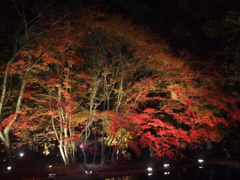 補081121曽木公園 194.jpg